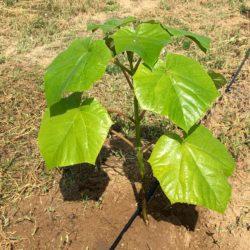 oxytree-sadzenie-warunki-glebowe