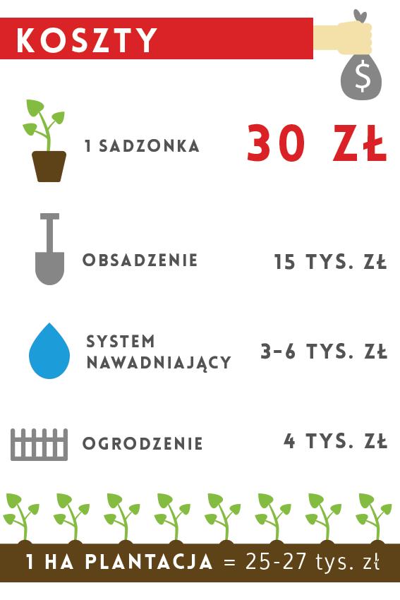 oxytree-koszty-plantacji-drzew-tlenowych