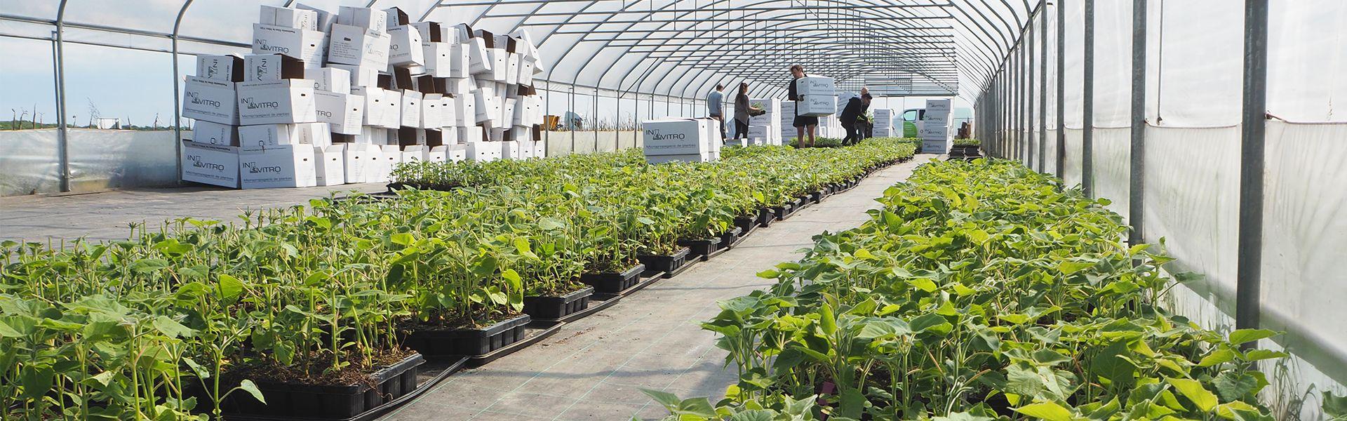 oxytree-plantacja-sadzonek-drzew-szybko-rosnacych