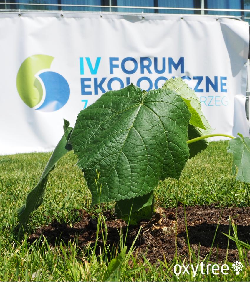 Kolejne Oxytree rośnie w Kołobrzegu, czyli IV Forum Ekologiczne