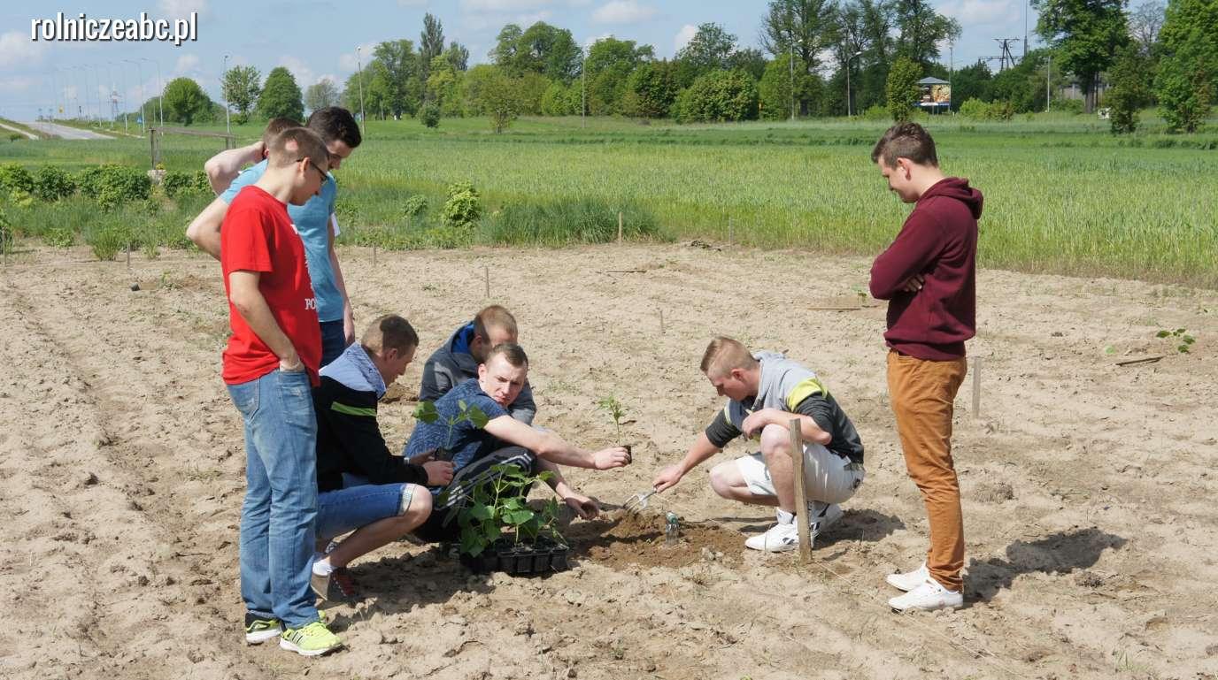 sadzenie-oxytree-doswiadczenie-rolniczeabc
