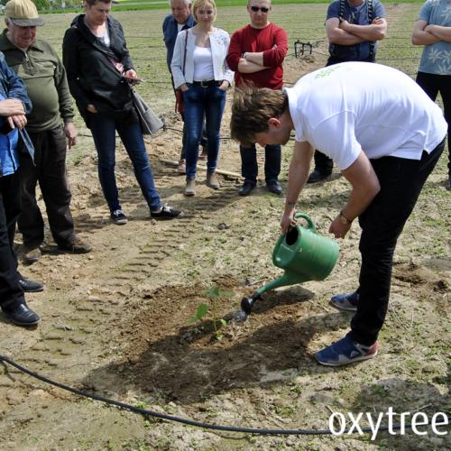 oxytree-sadzenie-drzewa-tlenowe-szybko-rosnace