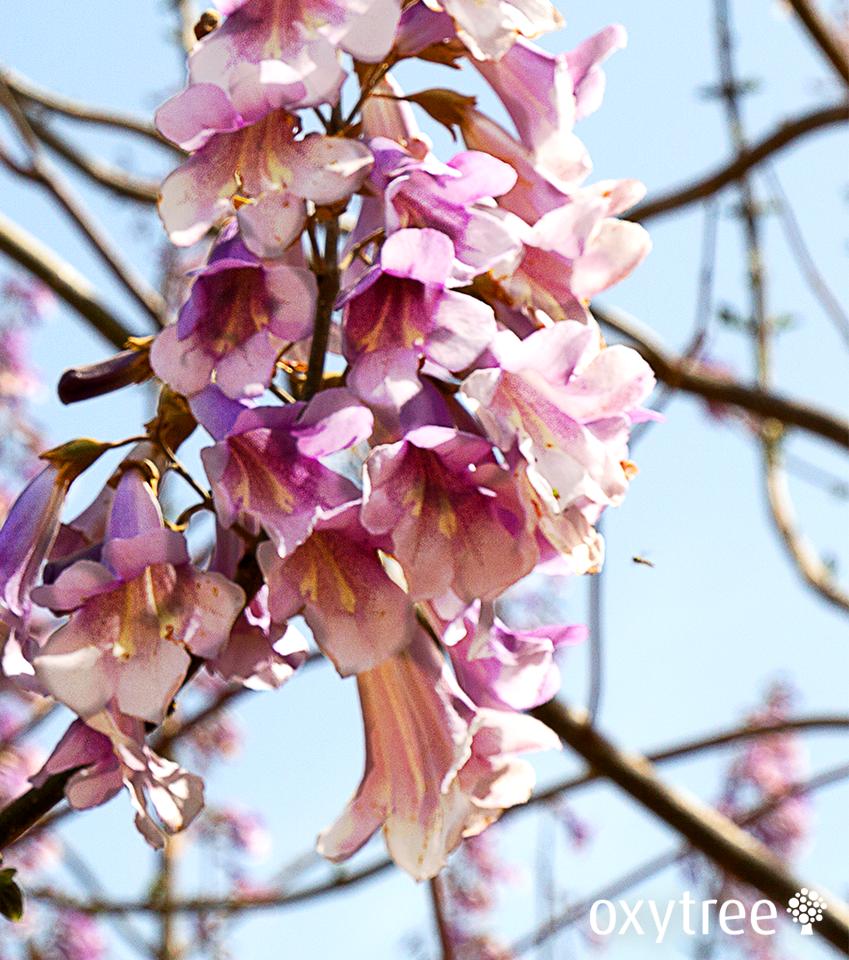 Drzewo tlenowe Oxytree na Gardenii 2018
