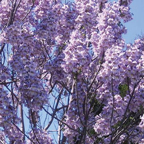 oxytree-kwiaty