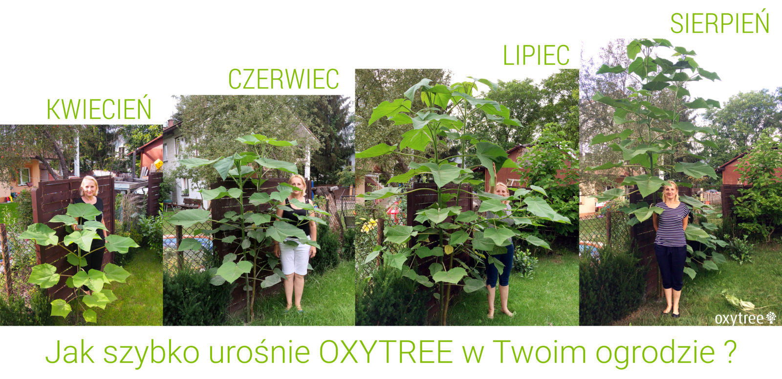 oxytree-ogrod-etapy-wzrostu
