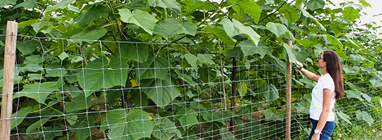 oxytree-plantacja-tarnow-roczne