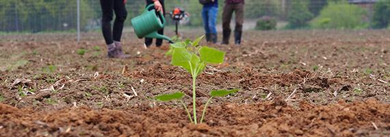 oxytree-sadzenie-nawadnianie-pielegnacja-plantacja