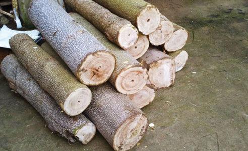 drewienka-oxytree
