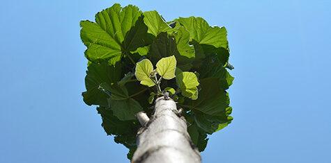 Drzewo-oxytree