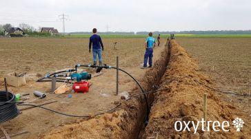 oxytree-nawadnianie-plantacja