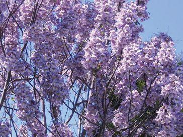 oxytree-kwiatki-drzew-szybko-rosnacych