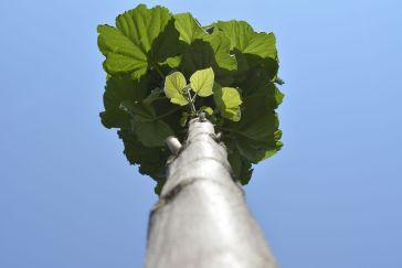 oxytree-drzewo-tlenowe-pien-korony