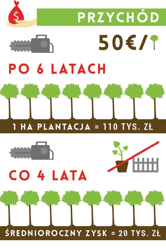 oxytree-zyski-z-plantacji