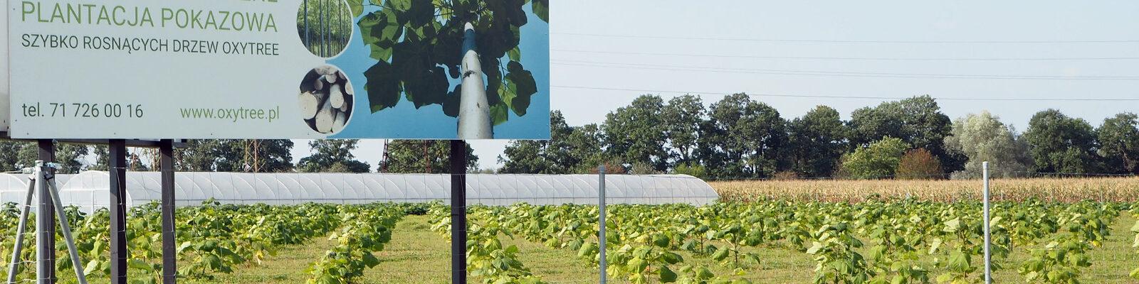 oxytree-firmowa-plantacja-katy-wroclawskie