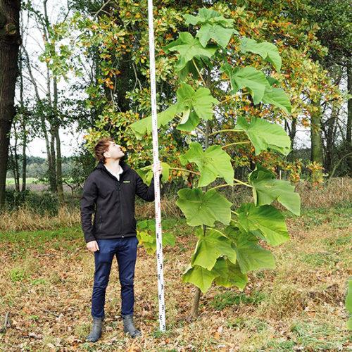 oxytree-plantacja-poznanskie