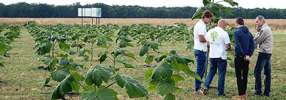 oxytree-plantacja-firmowa-dzien-otwarty
