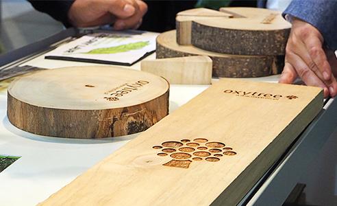 oxytree-drzewo-szybko-rosnace-drewno-probki