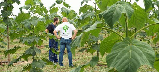oxytree-plantacja-odwiedziny