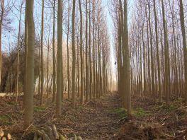 oxytree-las-drzew-tlenowych
